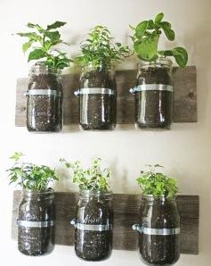 空き瓶の植木