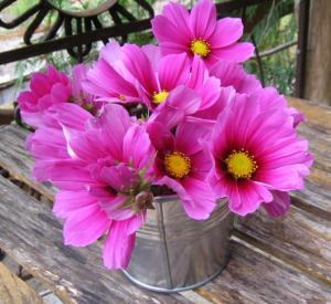 バケツにお花を生ける