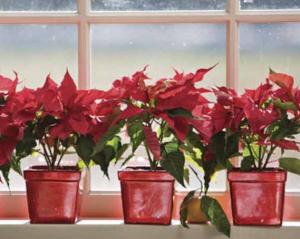 クリスマス窓飾り付け方法