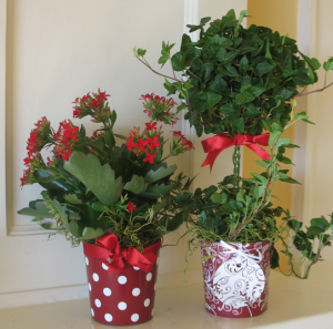 植木鉢の花のラッピング方法