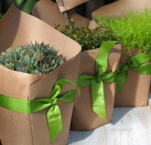 鉢植え草木ラッピング方法