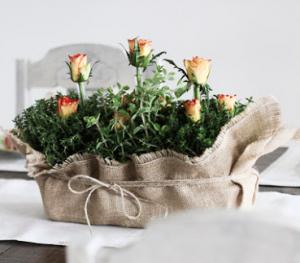 バラの植木ギフトラップ方法