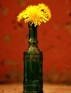 タンポポ花瓶に飾る方法